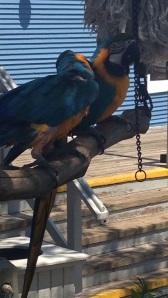 South Beach Parrots